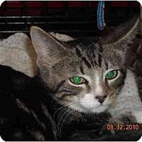 Adopt A Pet :: Lewis - Riverside, RI