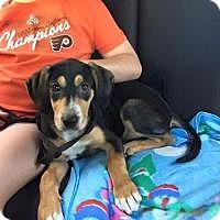 Adopt A Pet :: Tango - Marlton, NJ