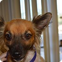 Adopt A Pet :: Chip - Scottsdale, AZ