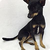 Adopt A Pet :: Bing - Mission Viejo, CA
