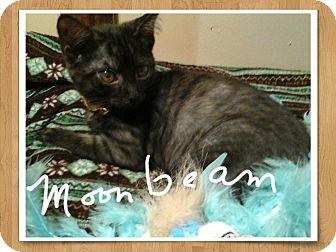 Domestic Shorthair Kitten for adoption in Parkton, North Carolina - Moonbeam