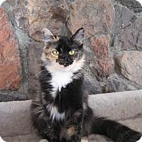 Adopt A Pet :: Mirka - Fallon, NV