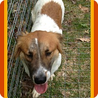 Adopt A Pet :: JANET - Middletown, CT