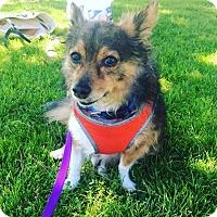 Adopt A Pet :: Vinny - Huntington Beach, CA