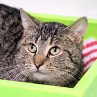 Adopt A Pet :: Gipper - Batavia, OH
