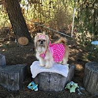 Adopt A Pet :: Harlee - San Diego, CA