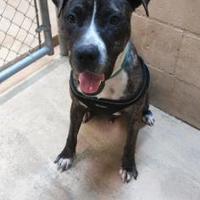 Adopt A Pet :: Kilo - Bradenton, FL