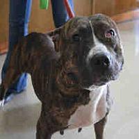 Adopt A Pet :: Bella - Newnan City, GA