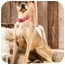 Photo 1 - German Shepherd Dog/Shar Pei Mix Dog for adoption in Portland, Oregon - Quetee