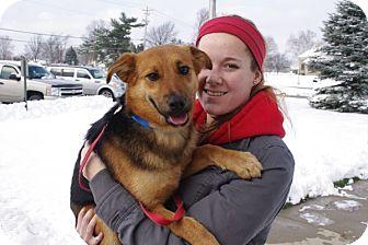 Shepherd (Unknown Type) Mix Dog for adoption in Elyria, Ohio - Archie-Prison Dog