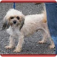 Adopt A Pet :: Lexi - Staunton, VA