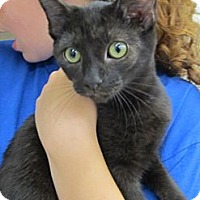 Adopt A Pet :: Coleman - Riverhead, NY