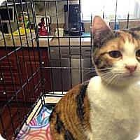Adopt A Pet :: Shasta - Pace, FL
