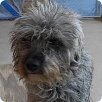 Adopt A Pet :: Eddie - dewey, AZ