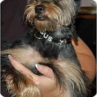 Adopt A Pet :: Angus - Columbia, SC