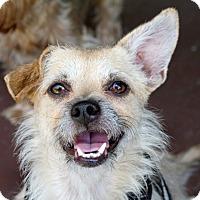 Adopt A Pet :: Franklin - Los Angeles, CA