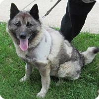 Adopt A Pet :: Elkie - Parsippany, NJ