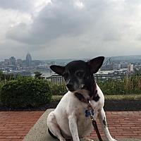 Adopt A Pet :: Consuela - Cincinnati, OH