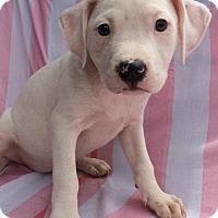 Adopt A Pet :: Reeta - Trenton, NJ