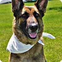 Adopt A Pet :: London - Gretna, NE