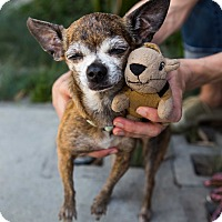 Adopt A Pet :: Janis - Los Angeles, CA