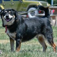 Adopt A Pet :: wilbur - Ottumwa, IA