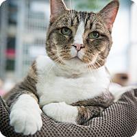Adopt A Pet :: Artie - New York, NY