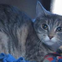 Adopt A Pet :: Oatmeal - Menomonie, WI