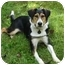 Photo 1 - Foxhound/Beagle Mix Dog for adoption in kennebunkport, Maine - Tex - in Maine!