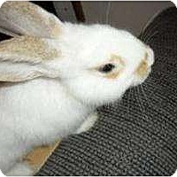 Adopt A Pet :: Twister - Maple Shade, NJ
