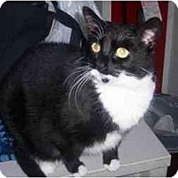 Adopt A Pet :: Tabitha - Quincy, MA