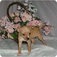 Adopt A Pet :: Puppy 3 - Chandlersville, OH