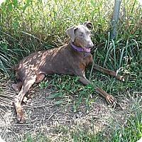 Adopt A Pet :: Cher--pending - New Richmond, OH