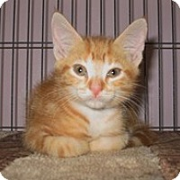 Adopt A Pet :: Ares - Shelton, WA