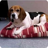 Adopt A Pet :: Petunia - Indianapolis, IN