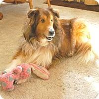 Adopt A Pet :: Jasper - Circle Pines, MN