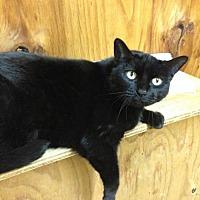 Adopt A Pet :: Mia - Elgin, TX