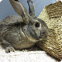Adopt A Pet :: Hunter - Newport, DE