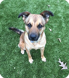 Shepherd (Unknown Type) Mix Dog for adoption in Germantown, Tennessee - Mia