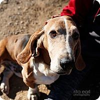 Adopt A Pet :: Arthur - Acton, CA