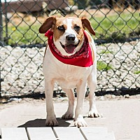 Adopt A Pet :: Bambi - Transfer, PA