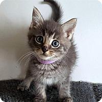 Adopt A Pet :: Chevy - Richmond Hill, ON