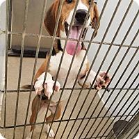 Adopt A Pet :: Hadfield - Pittsburg, KS