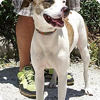 Adopt A Pet :: Dakota - Englewood, FL
