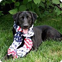 Adopt A Pet :: JETTA - richmond, VA