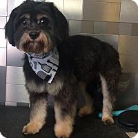 Adopt A Pet :: Langford - McKinney, TX