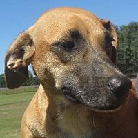 Adopt A Pet :: Buster Brown - Westport, CT