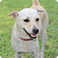 Adopt A Pet :: LITTLE DANKE - Washington, DC