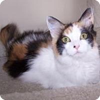 Adopt A Pet :: K-MaryG3-Sasha - Colorado Springs, CO