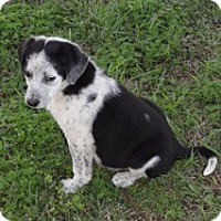 Adopt A Pet :: Rosey - Conway, AR